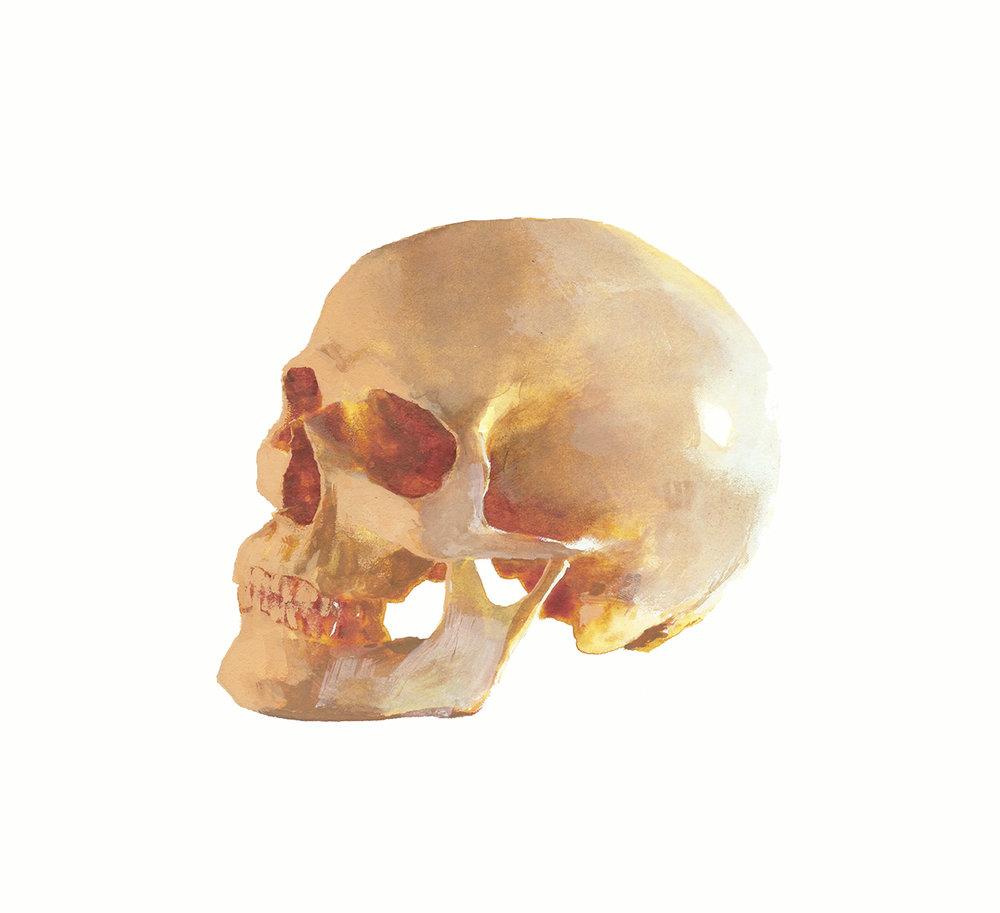 Skull-CJ-Ramone-Rony-Bergfeldt.jpg