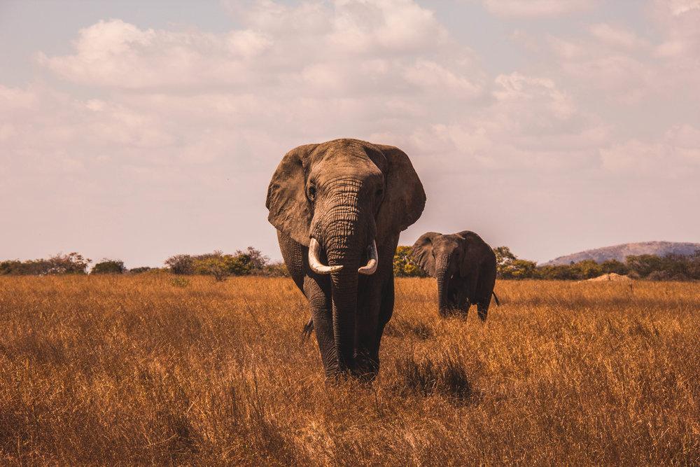 O QUE devemos ver e fazer em áfrica -