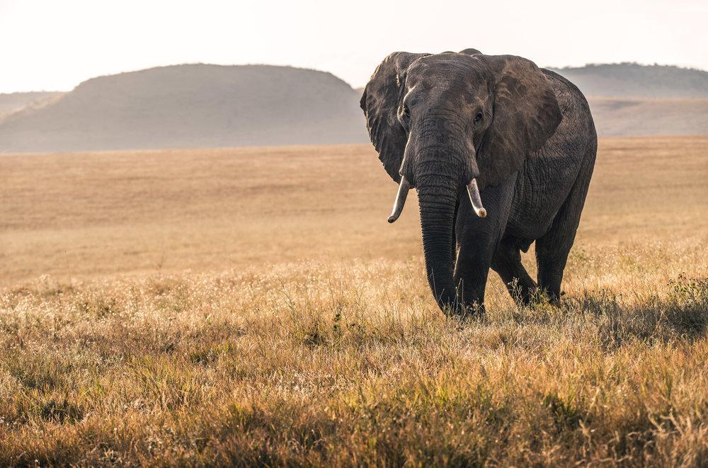 reserva dos elefantes de Maputo -