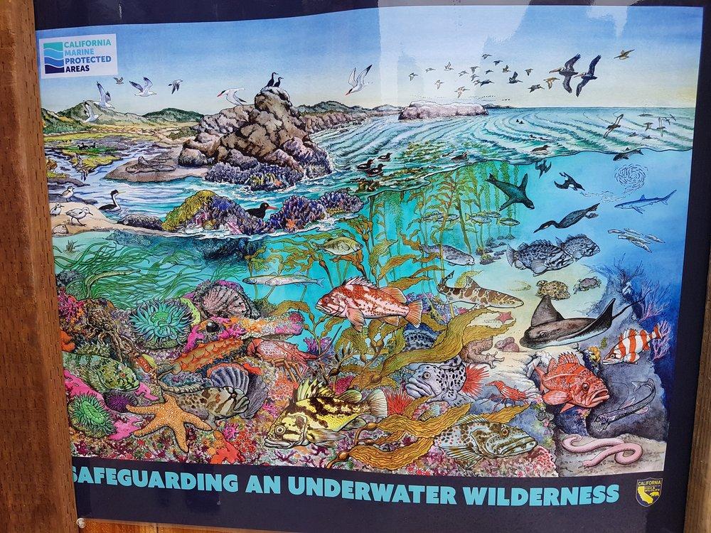Some of the interpretation panels at Pt Lobos