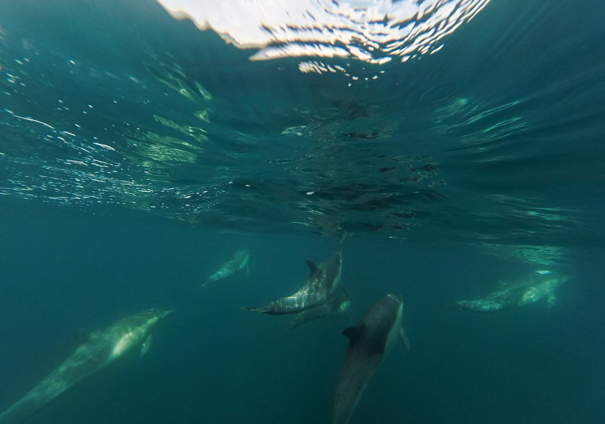 Dolphins playing off our bow.