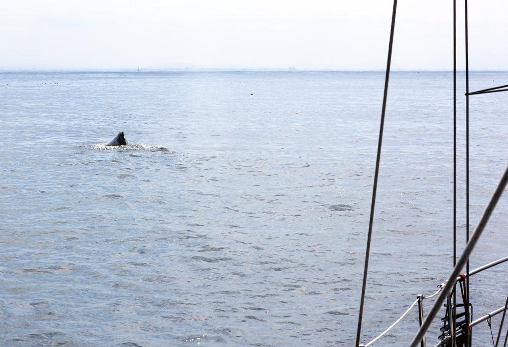 whale-4.jpg
