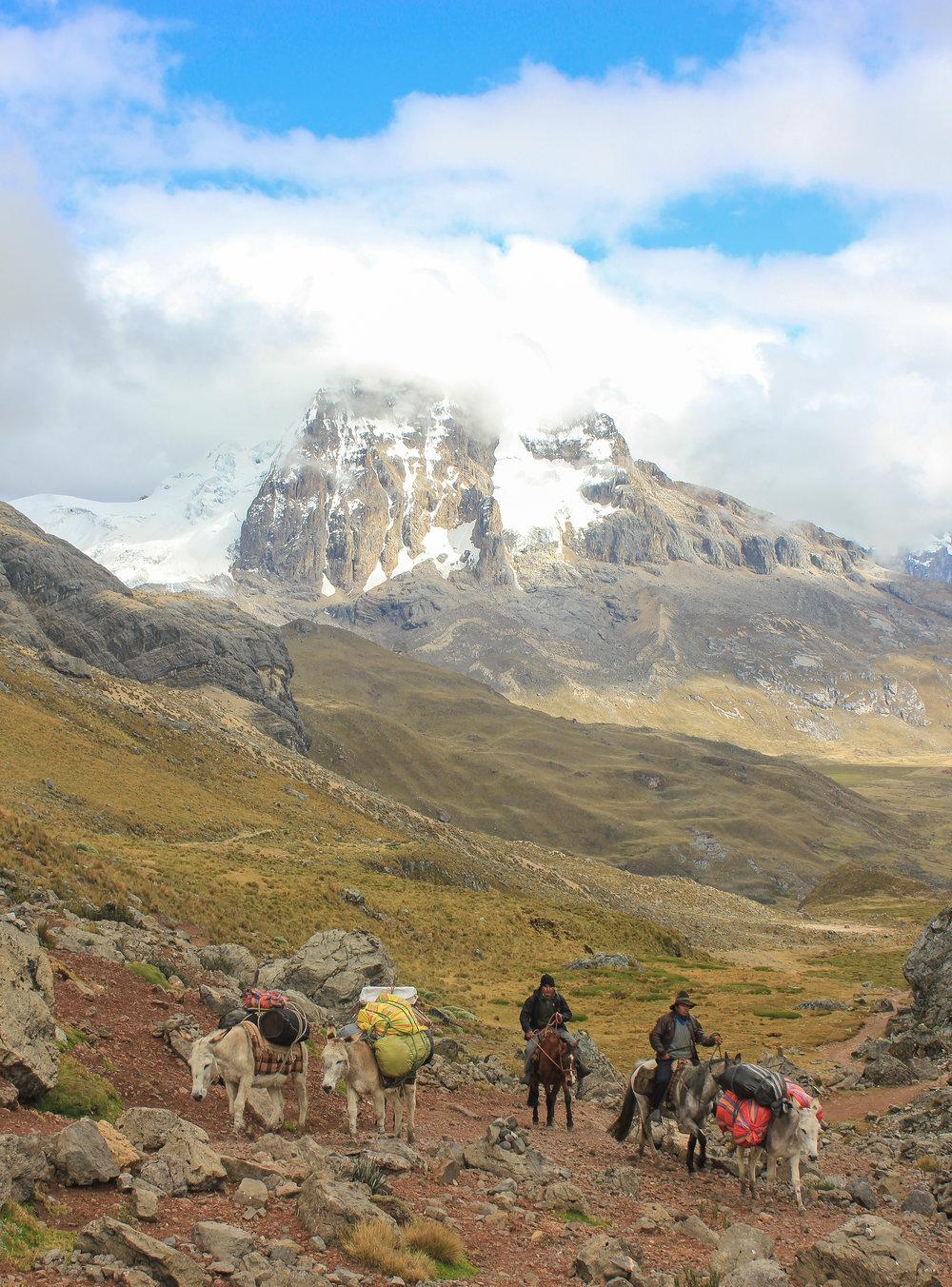 Donkys approaching the top of the Portachuelo de Huayhuash Pass, 15,700ft.