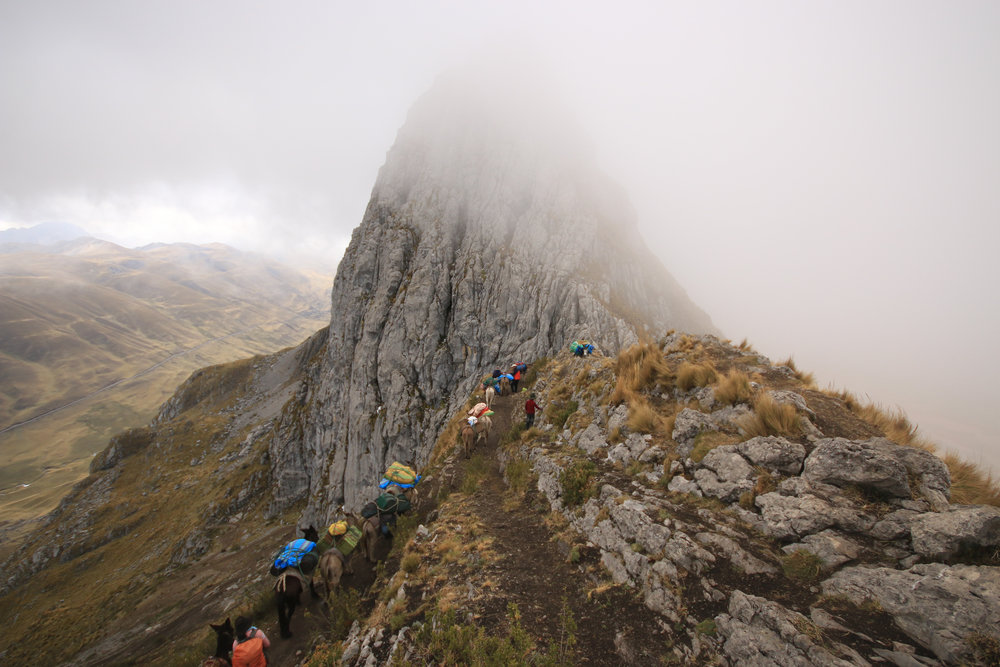 Donkey train reaching the top of the Cacananpunta Pass. (15400ft)