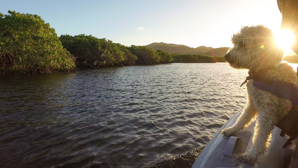 Exploring Bahia Magdalena's mangroves with Sloboda.