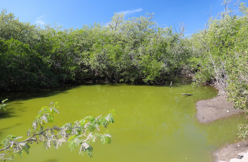 We saw three baby crocs in this electric green pool on the side of the road! Crocodiles everywhere!