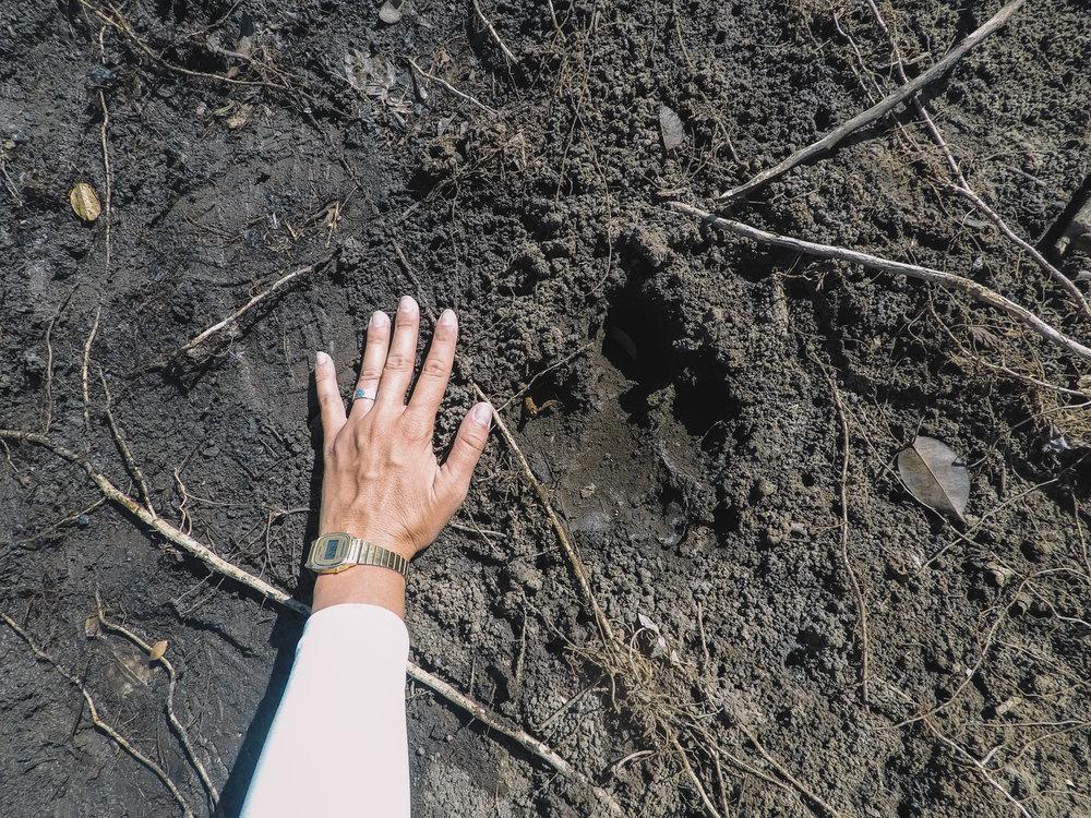 A huge tapir print along our hike.