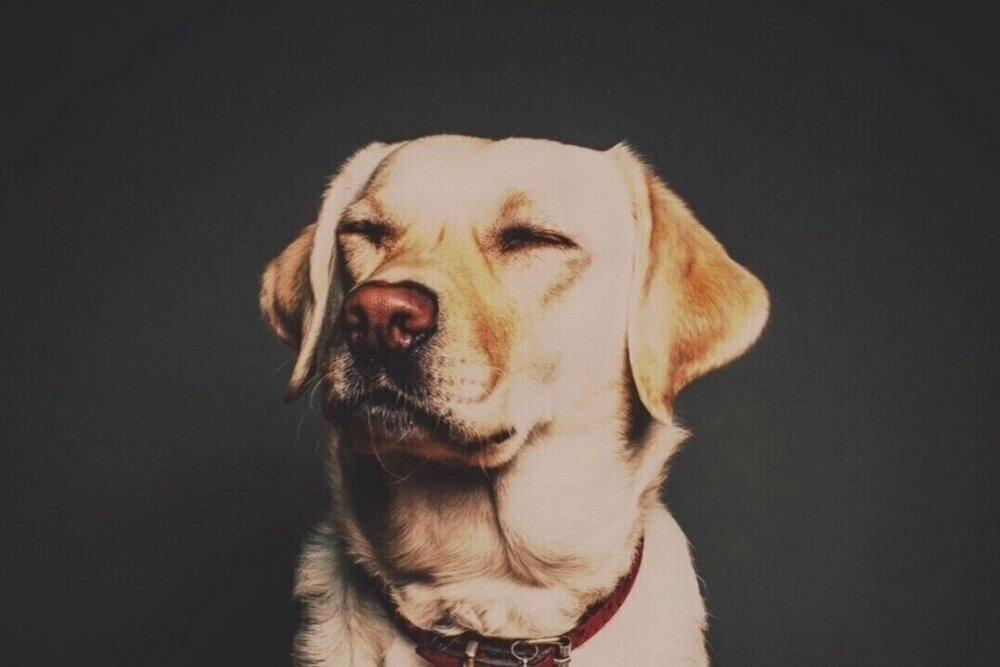Dog's -
