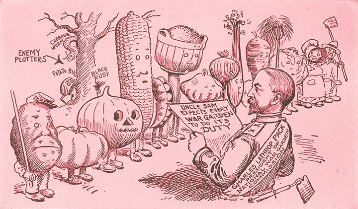 First World War Garden Cartoon from the National War