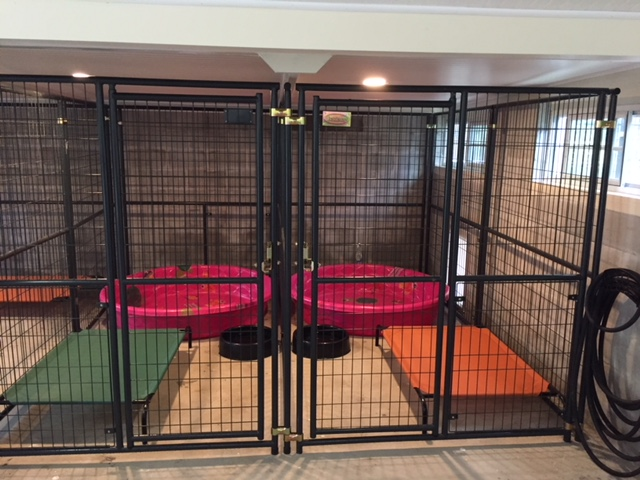 A Comfortable andCleanable Space - Our dog runs are convertible. The way they are pictured here is as 5' wide x 15' long. They can, however, be reconfigured into any size – from one large pen to four individual pens. The last run here on the right has a covered flap dog door that leads to the fenced 50' x 50' dog yard. The dog door also has a guillotine cover so we can lock our dogs in during inclement weather or when they need to stay indoors with their puppies.