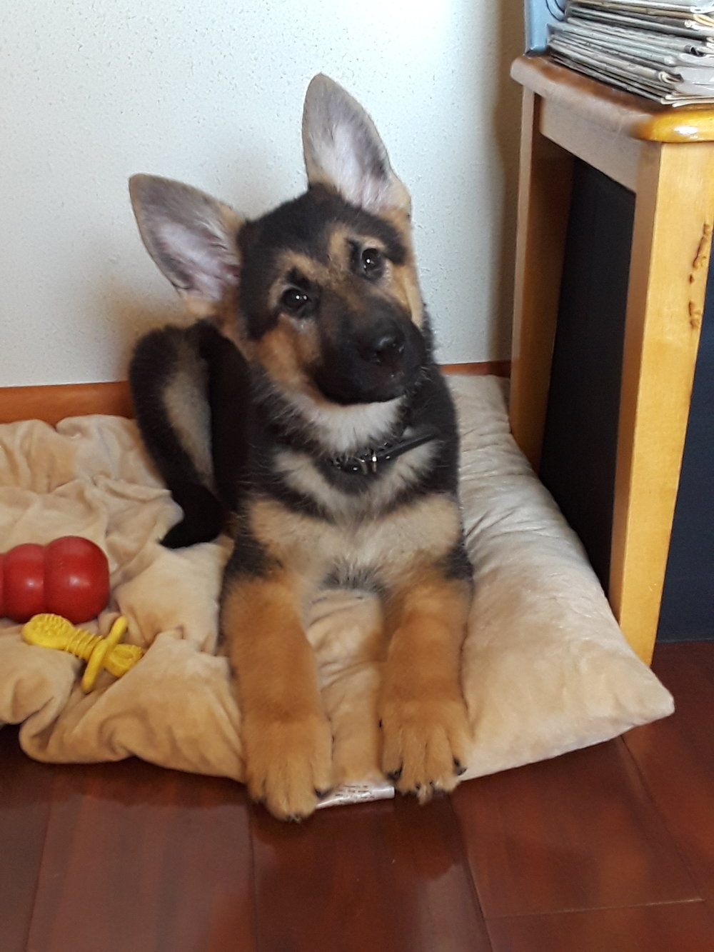 11 Weeks Old