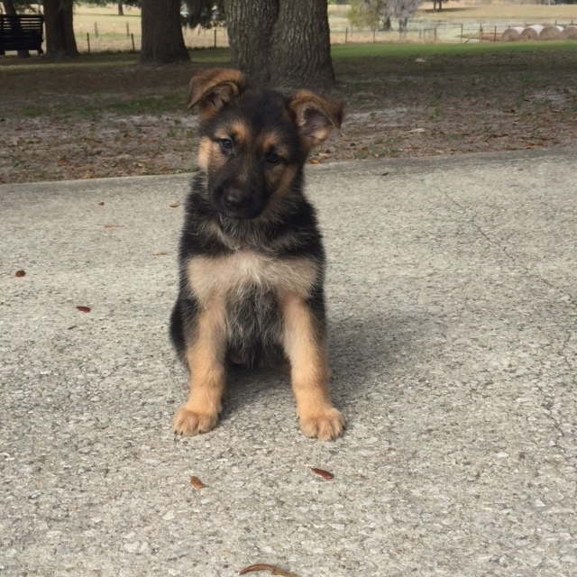 7.5 Weeks Old