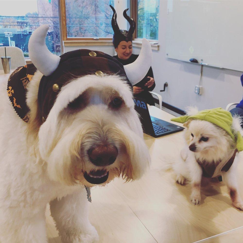 dogs_halloween.JPG