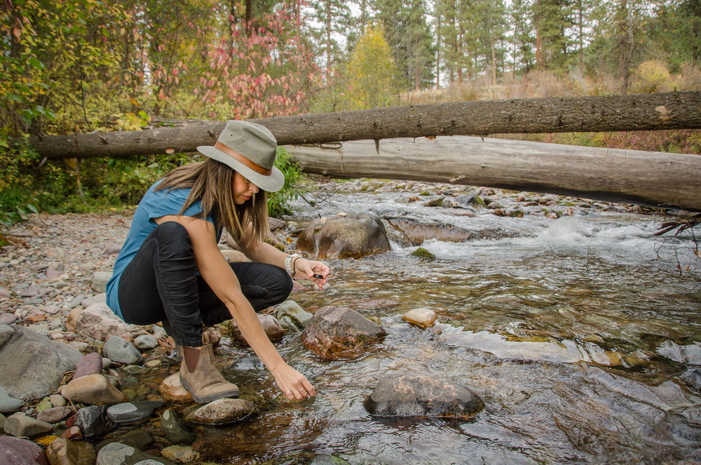 cromwell-stream-ecology.jpg