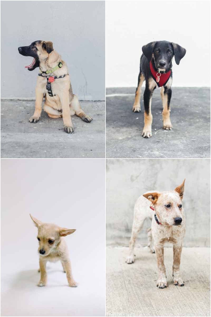 adopt don't shop for dogs in los angeles