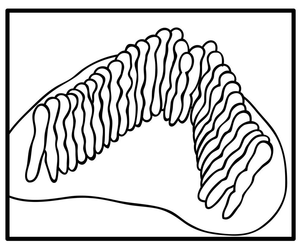 inner hair cell 01.jpg