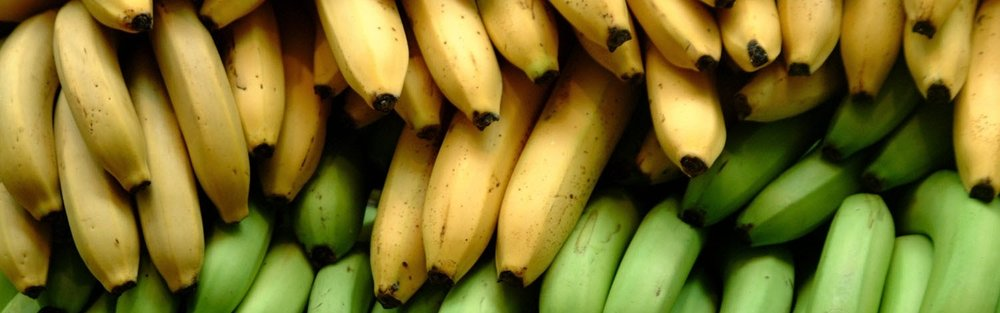Banana-Bioplastic.jpg
