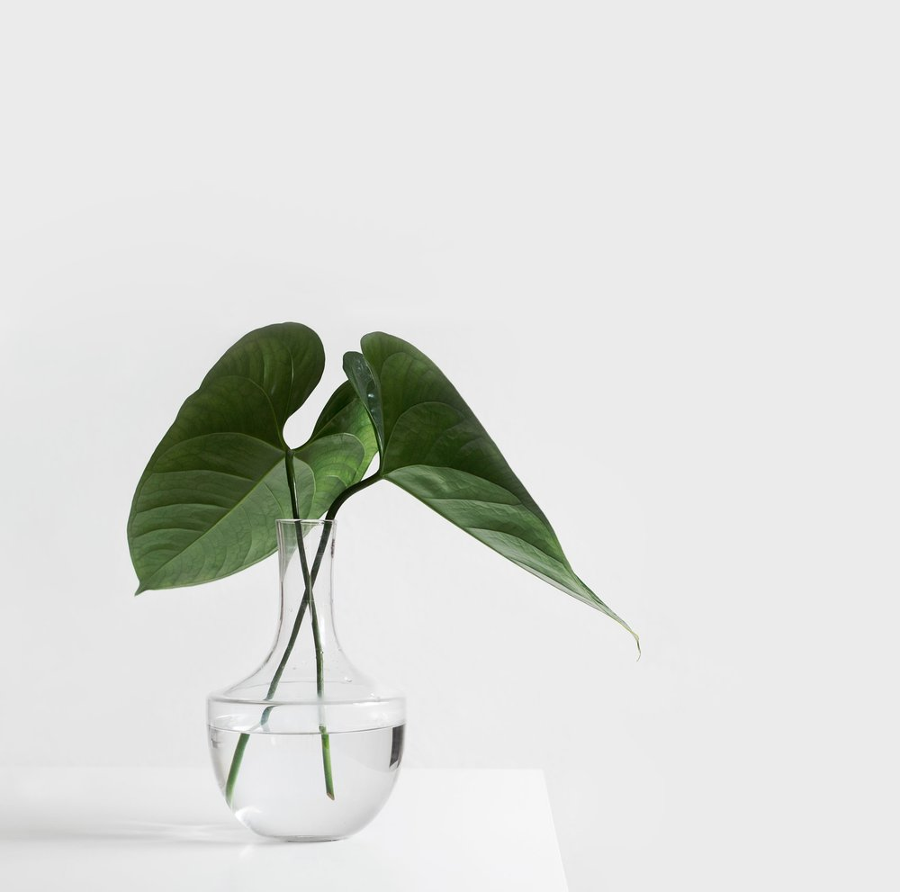 WEEKLY FLOWERDELIVERY - FLOWERS FOR YOUR WORK SPACE