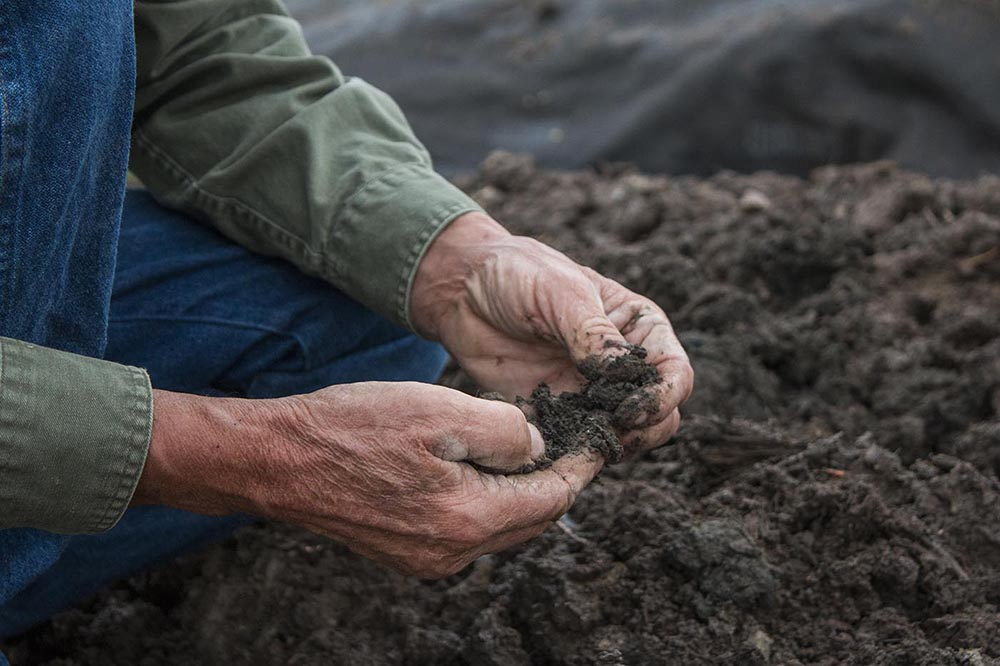 Steve feels the newly regenerated soil. Steve feeds his soil microbes and organic matter to keep his soil rich and healthy.