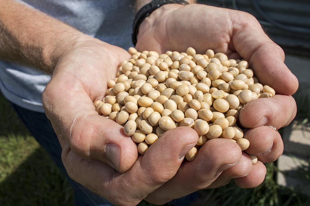 Aaron holds a handful of soy beans.