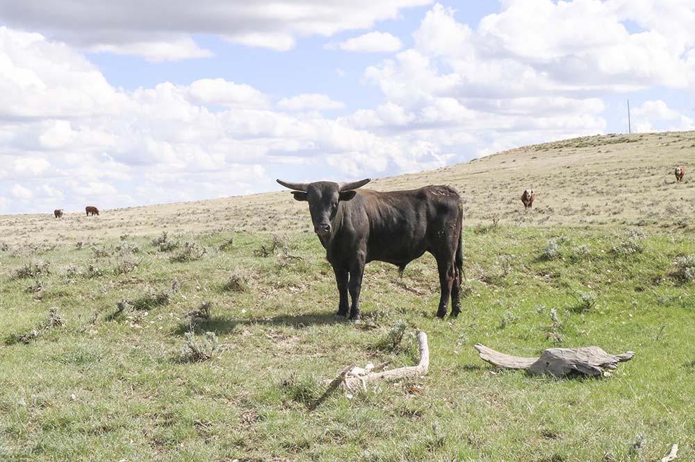 A pasture at Empire Ranch.