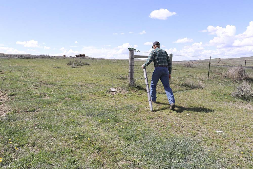Justin opening the gate to check cows.