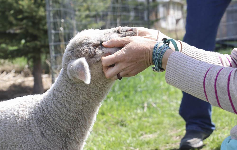 sheep_snuggles.jpg