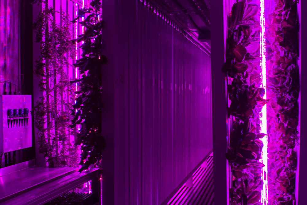 Inside the shipping containers converted by Freight Farms. The insulated hydroponic pods allow Brittany to control her temperature and moisture levels to produce all year round.