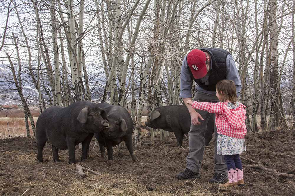 Brittany's husband Ben Sechler and their 2-year old daughter, Alexandra, say hello to pigs at Elevated Harvest. Ben and Brittany also have a 4-year old daughter named Adelaide.