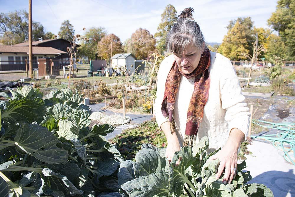Ellen examines her greens at her plot at the community garden.