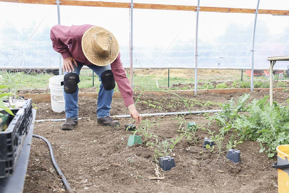 Tom working in the greenhouse at Box Cross Road Farms.