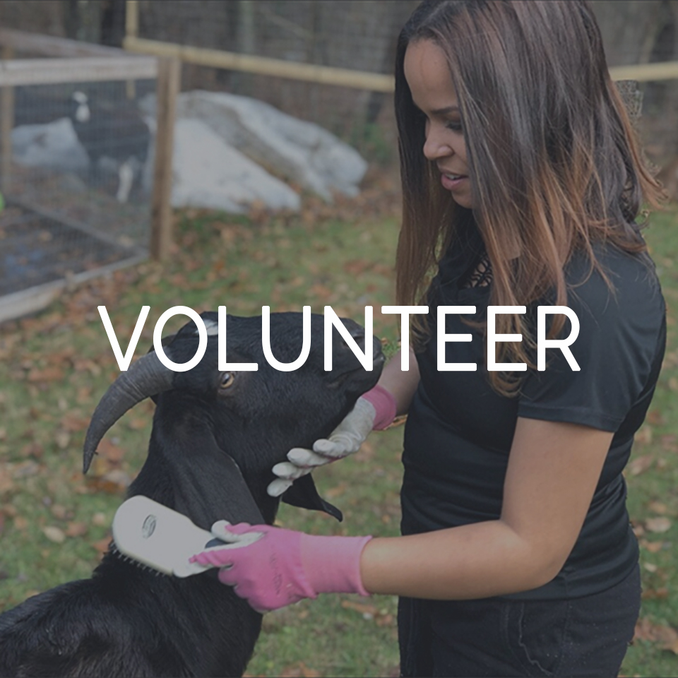 Volunteer Thumbnail Riley Farm Rescue.jpg