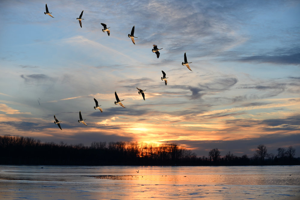"""lessons from geese - Our name comes from the story, """"Lessons From Geese."""""""