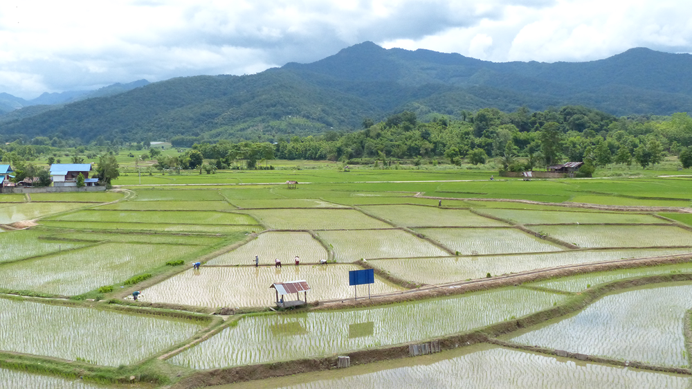 Rice Field.png