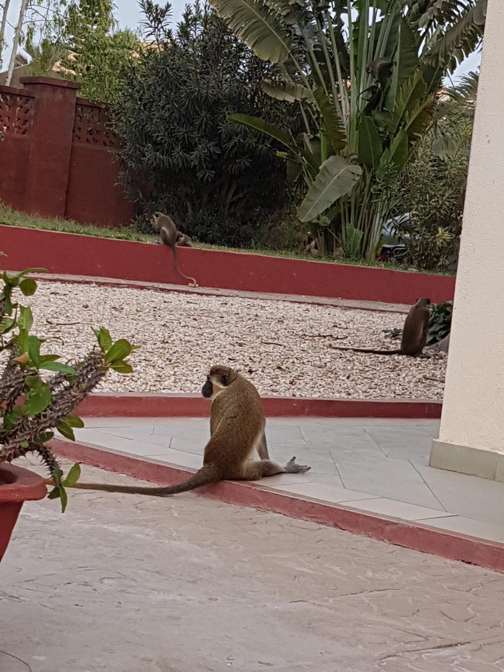 monkeys 2 (day 2).jpg