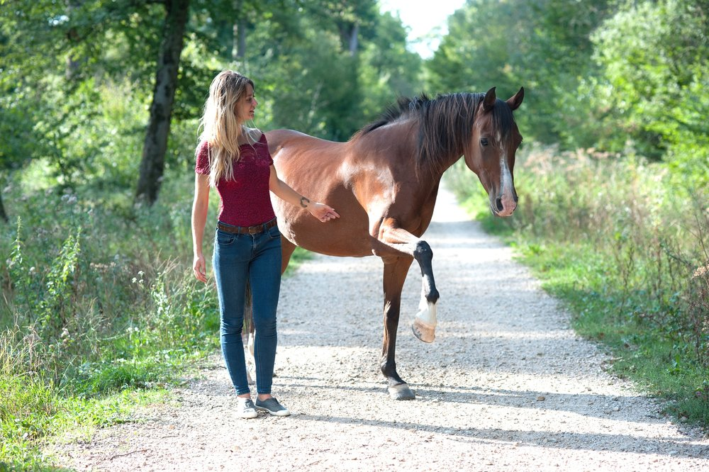 Autodidacte dans le travail à pied, élève de tous les chevaux qui sont mes meilleurs professeurs.