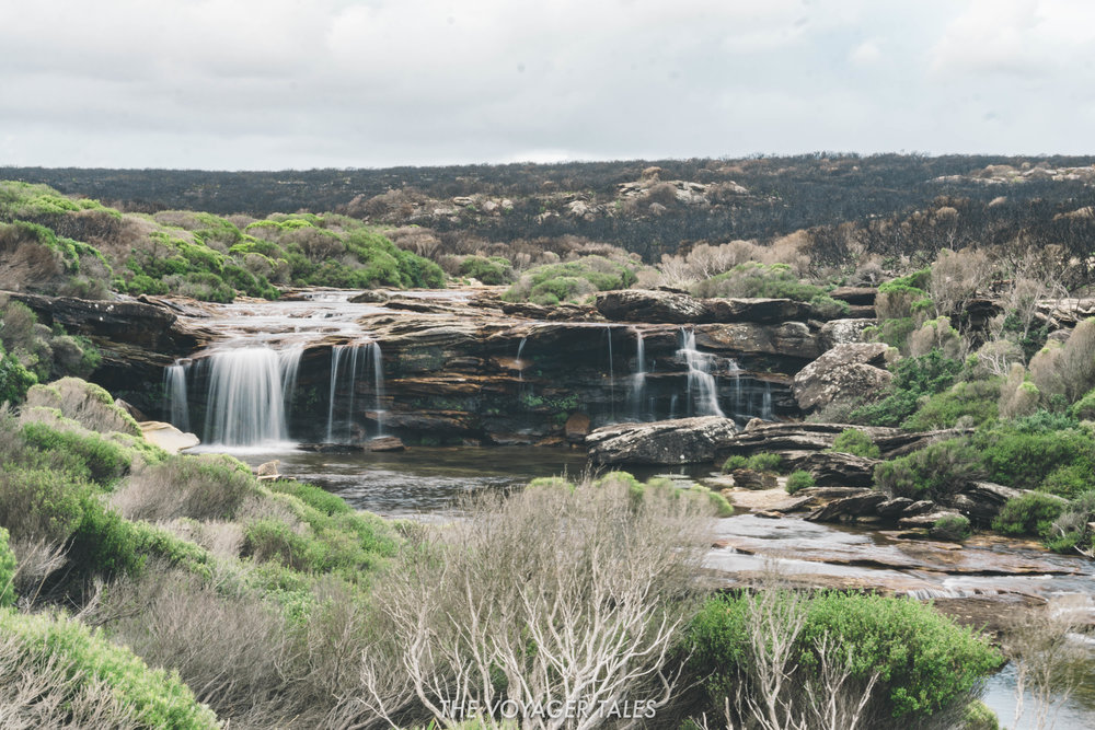 The Royal National Park.jpg