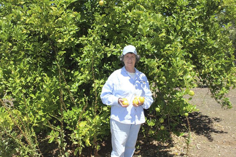 30ia lemons.jpg
