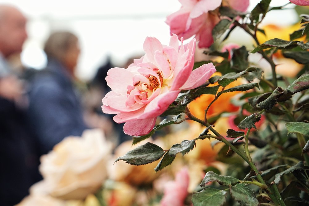 SOUTHPORT FLOWER SHOW -