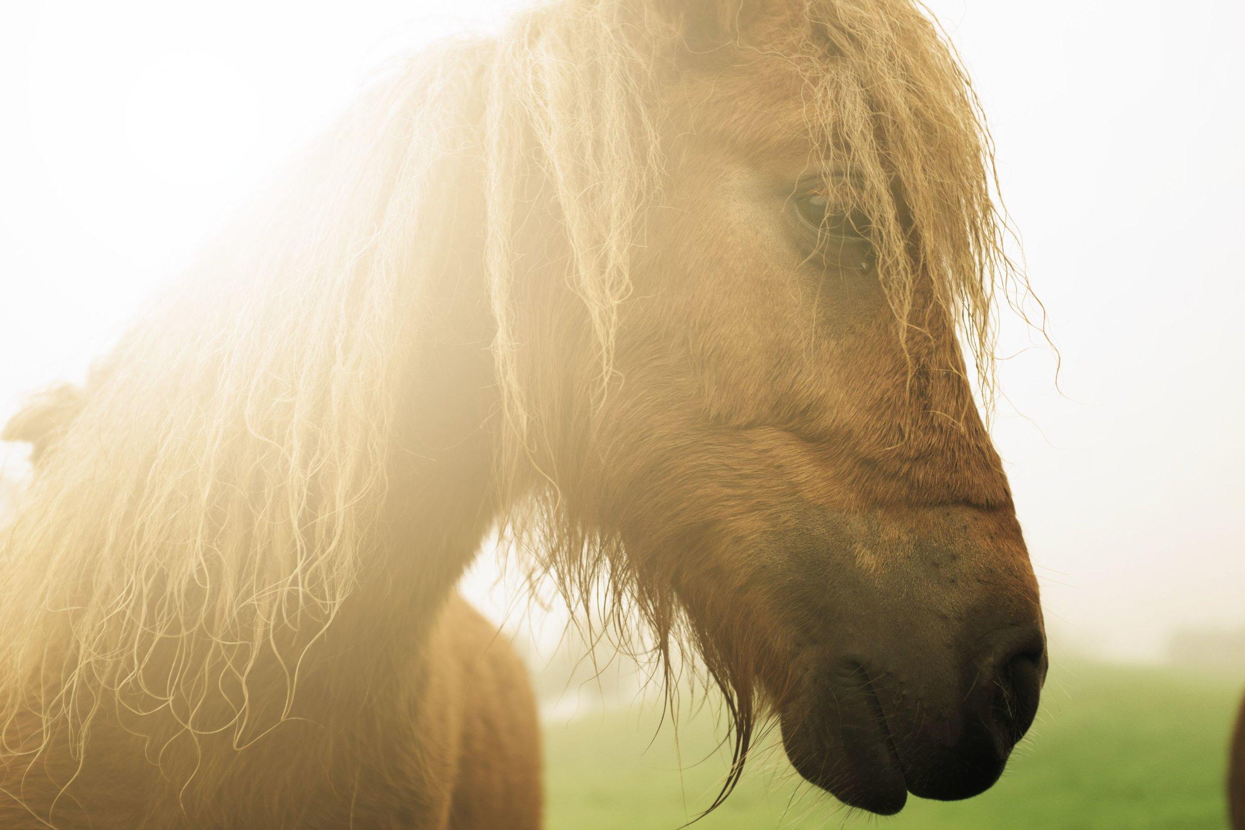 hest i sol
