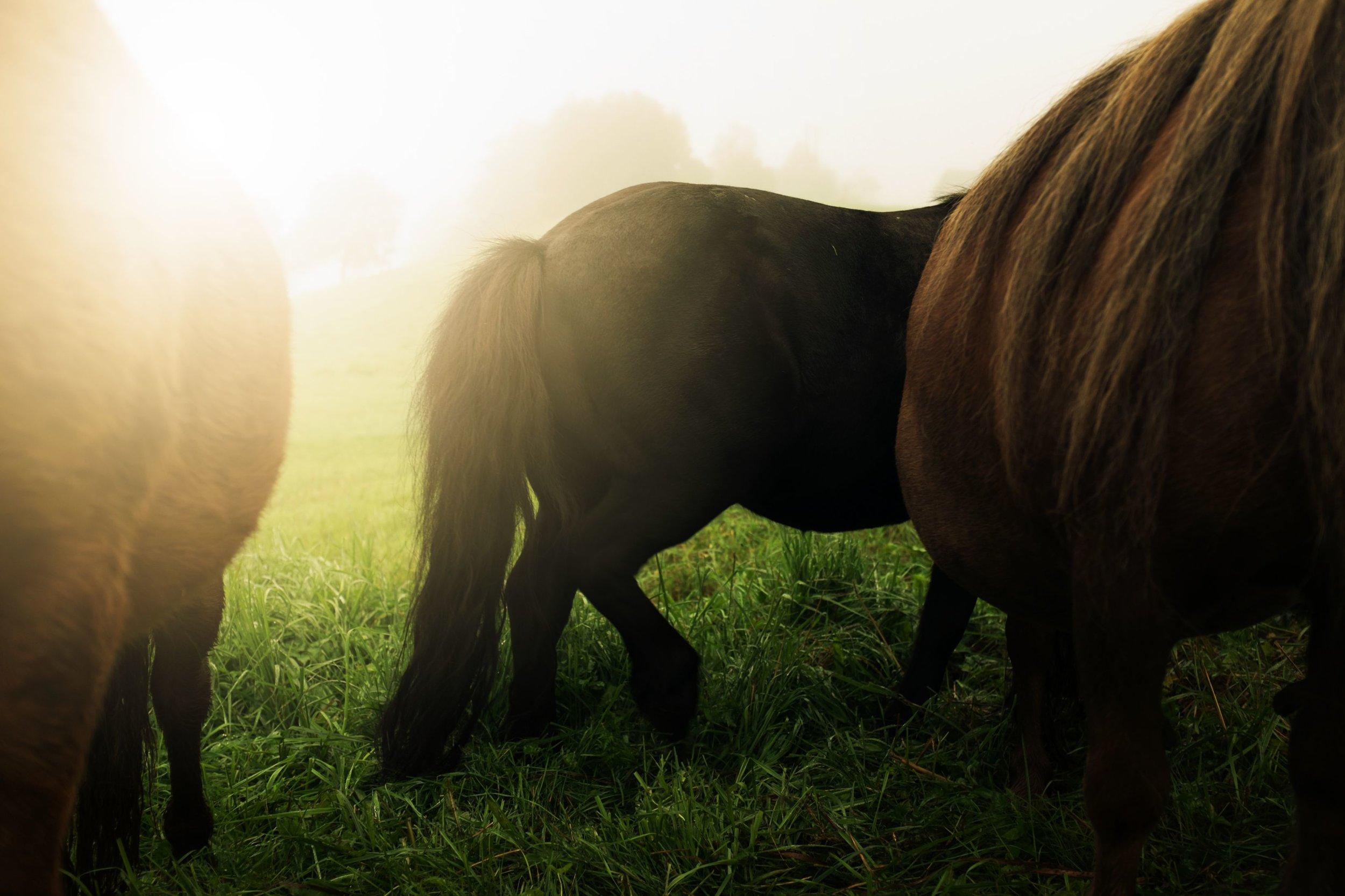 hester i sol