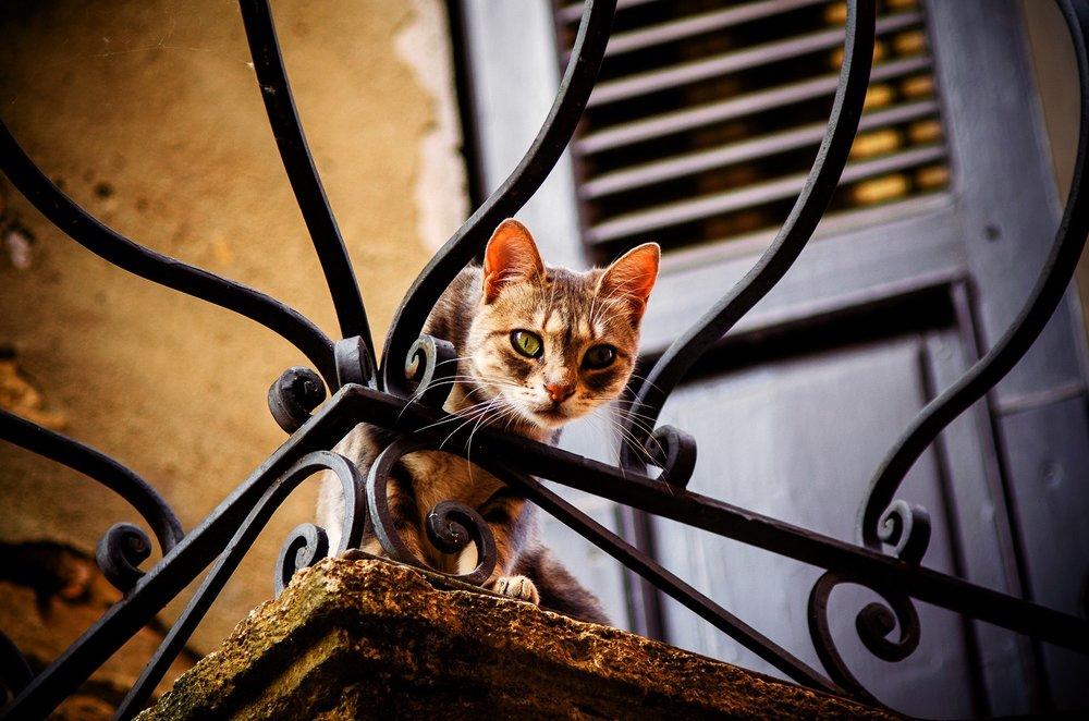 Cat on balcony