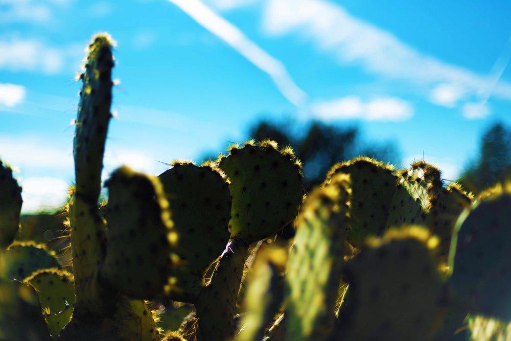 Arizona - January, 2019