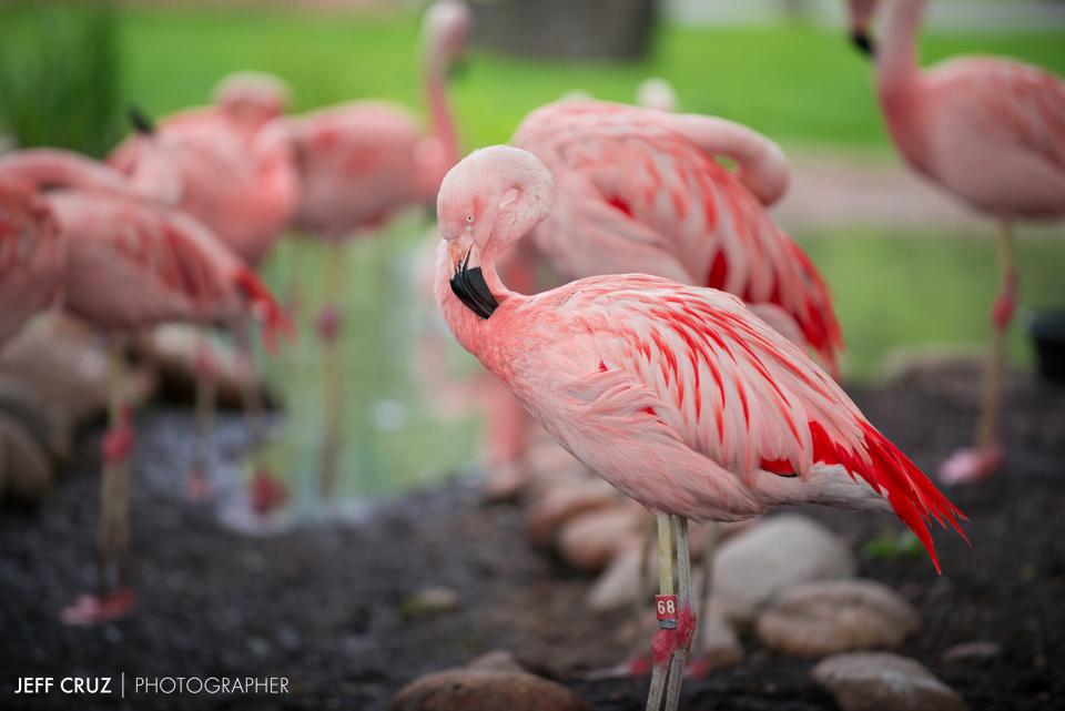 JeffCruz-Zoo-0018-4566_lowres.jpg