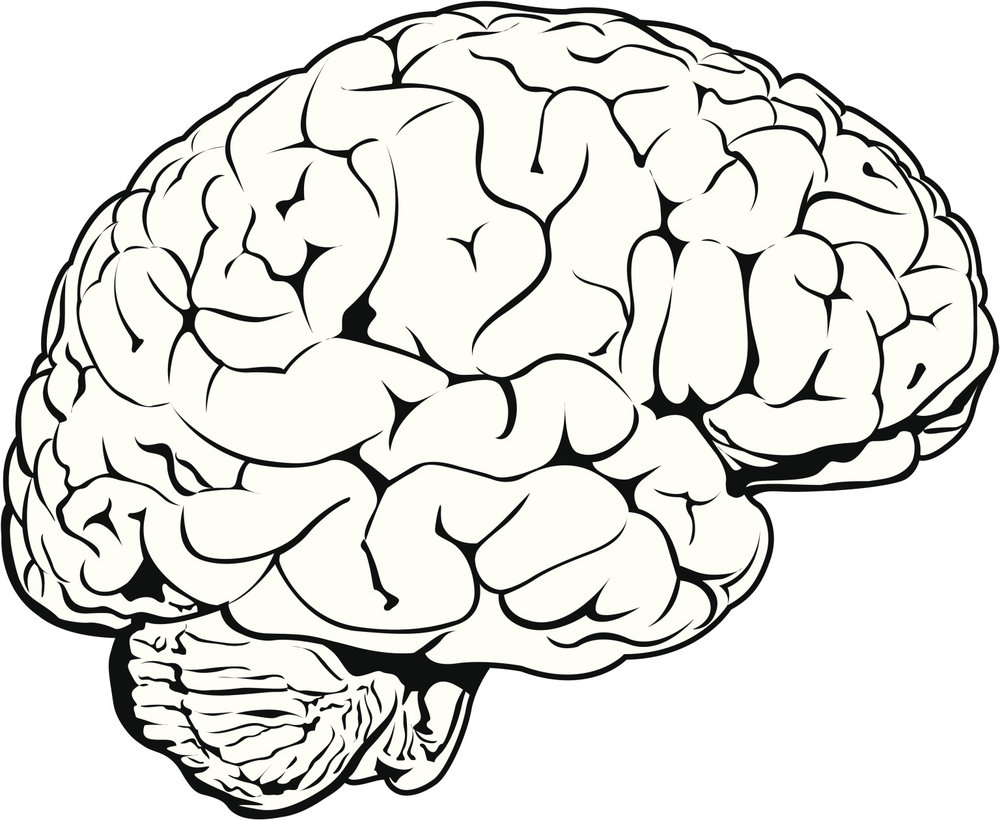 Picture of brain.jpg