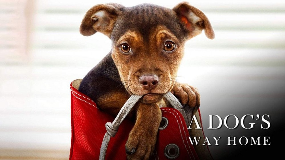 dogs-way-home.jpg