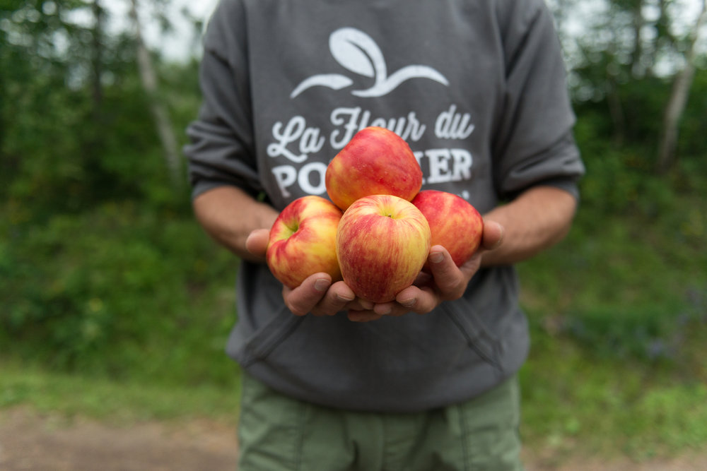 La Fleur du Pommier - Récolte de Chez Nous - Really Local Harvest