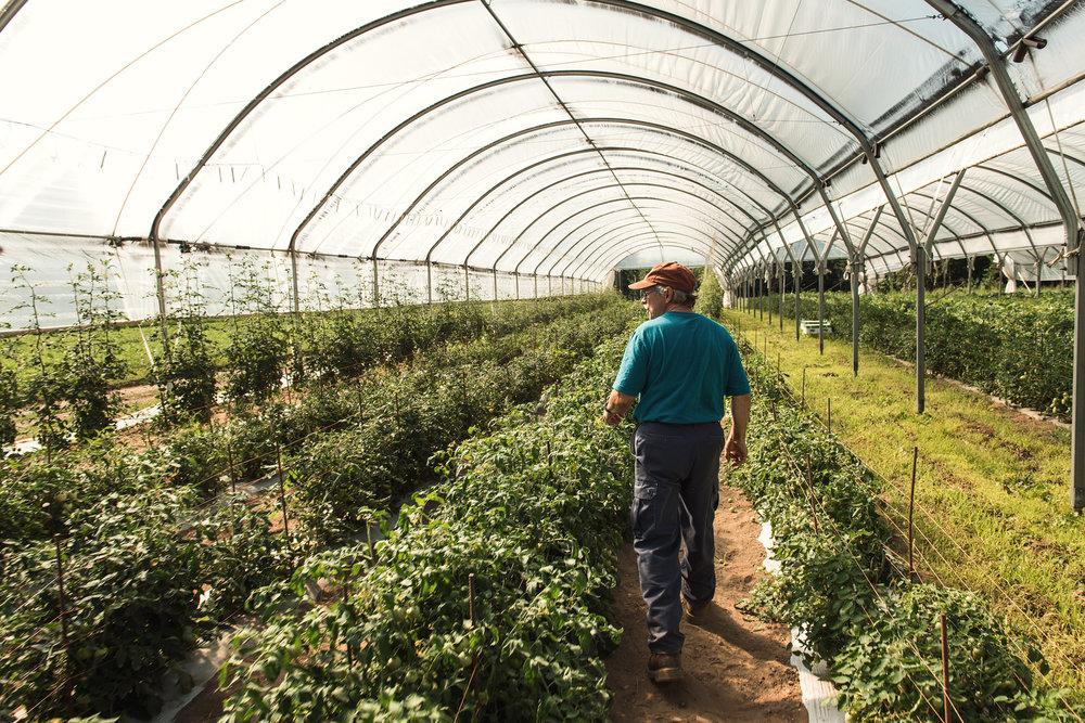 Copy of Ferme Pouce Vert - Green Thumb Farm  - Récolte de Chez Nous - Really Local Harvest