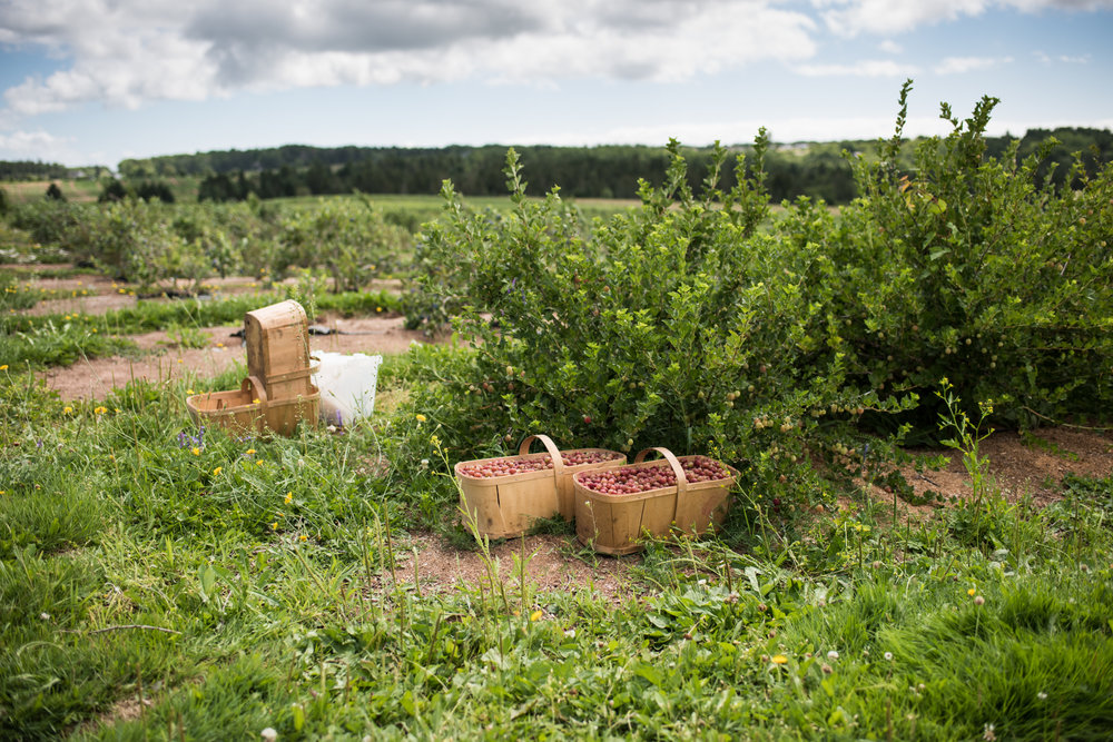 Copy of Les Petits Fruits de Pré-d'en-Haut - Récolte de Chez Nous - Really Local Harvest