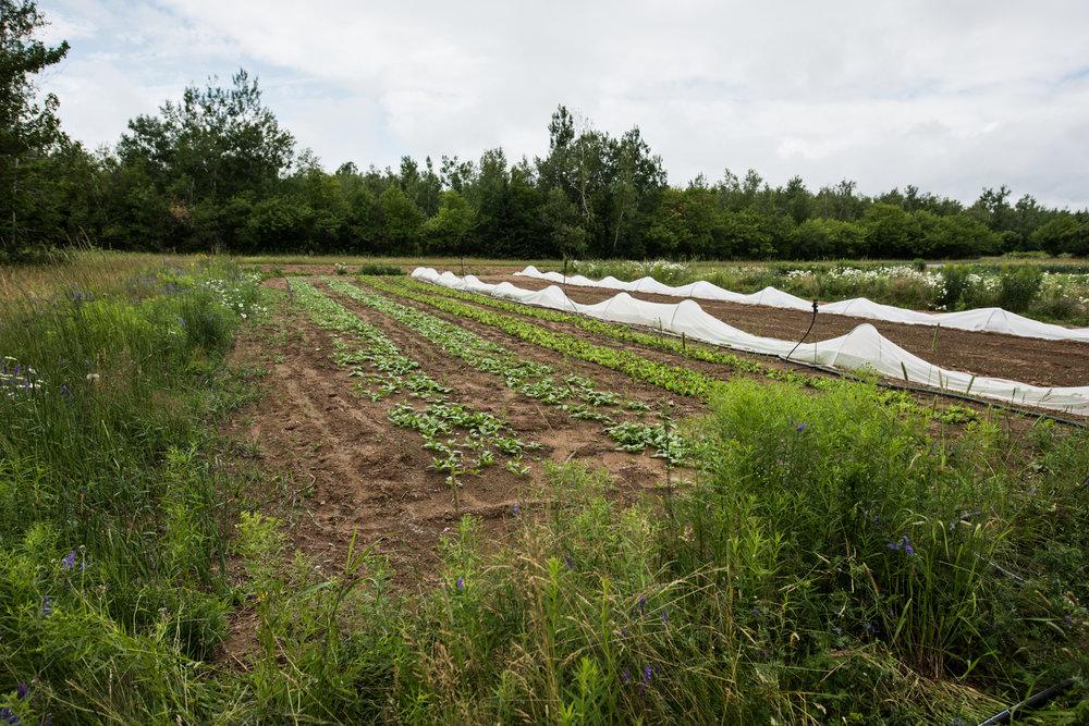 Copy of Les Jardins vert l'avenir - Récolte de Chez Nous - Really Local Harvest
